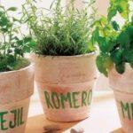 10 Hierbas Comestibles Que Nunca Pueden Faltar En El Hogar