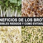 Brotes o semillas germinadas: Beneficios, problemas y como consumirlo