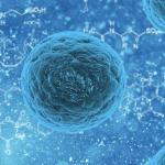 El ayuno aumenta la capacidad de regeneración celular