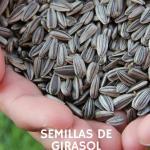 Semillas de girasol: Propiedades, beneficios y usos