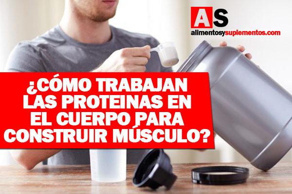 como funcionan las proteinas en el cuerpo