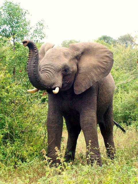 """Incapacitatea  ruperii lanturilor mentale si emotionale – """"Povestea elefantului"""""""