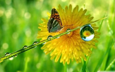Bucuria vindeca celulele si organele trupului