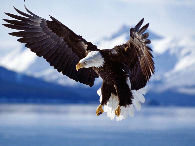 """Daca te nasti gaina, nu ai cum sa ajungi vultur"" – Poveste"