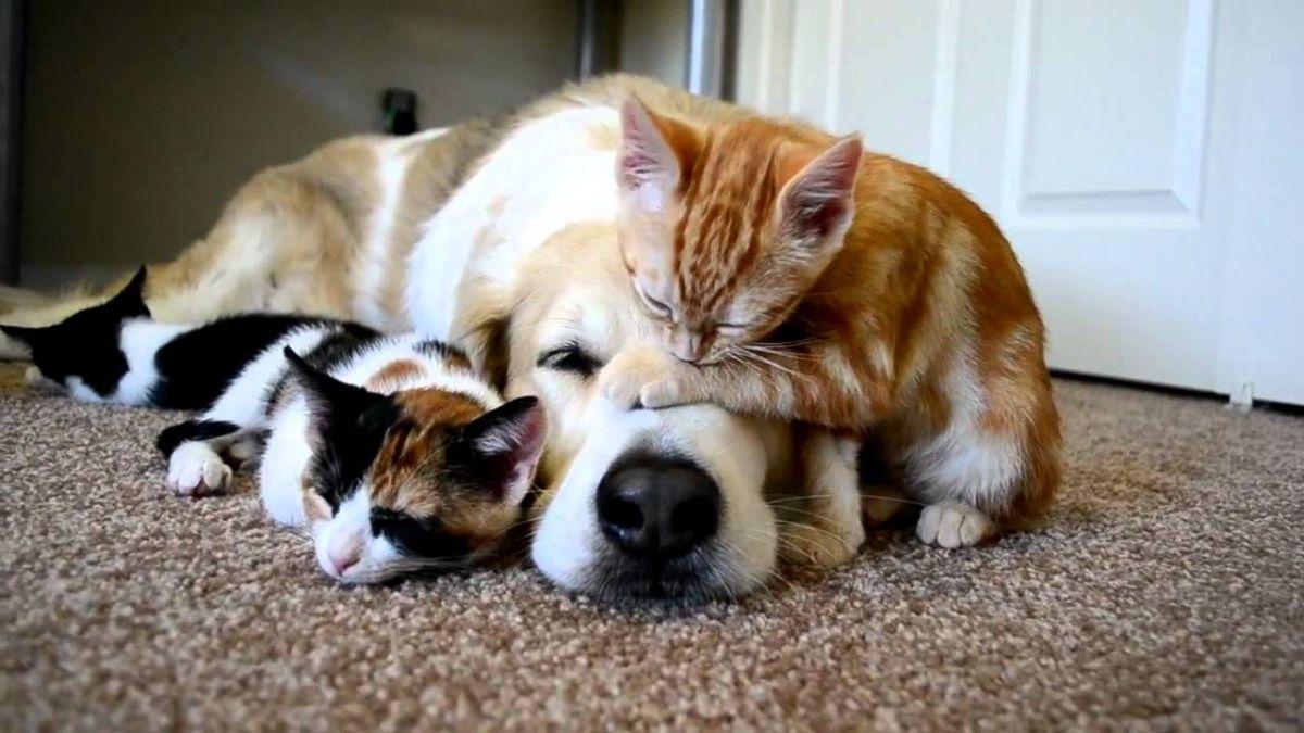 Animalele de companie reduc stresul si anxietatea