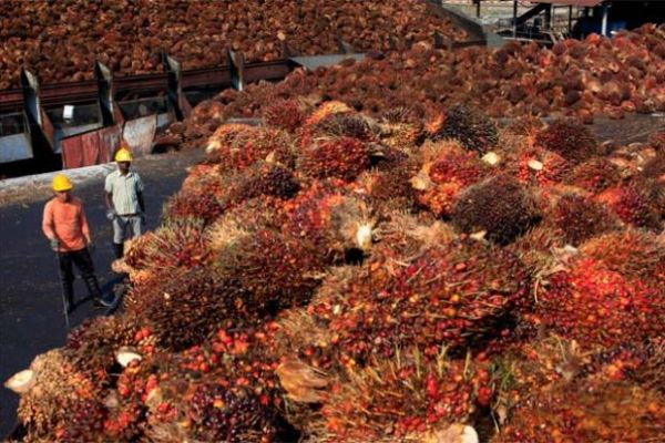 Alinad Farms Palm Oil