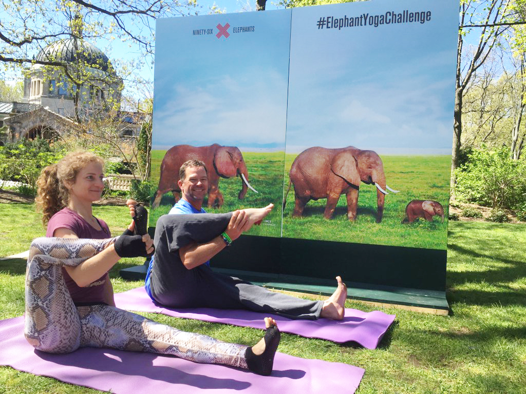 Elephant Yoga Challenge Signs at Bronx Zoo