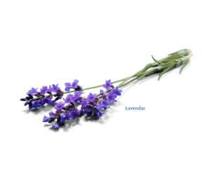 lavendar essential oil eagle idaho