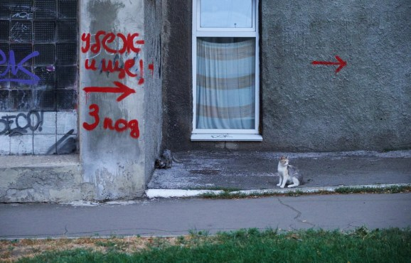 Bomb shelter sign and the cat