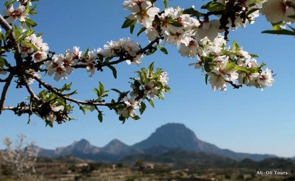 Almendro en flor Alicante