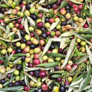 olivas aceite gourmet alicante