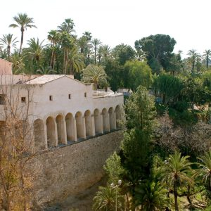 excursion elche con ali oli tours
