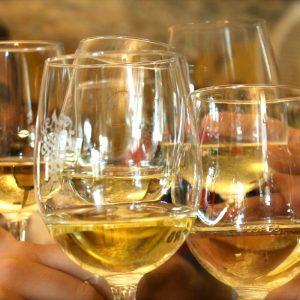 cata vinos alicante