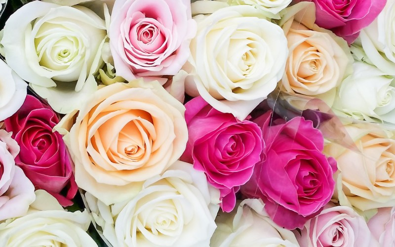 bunch-of-roses-102348