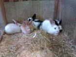 Lots of Bunnies!