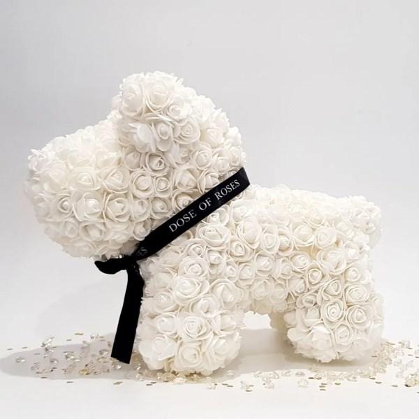 Ivory long rose dog front