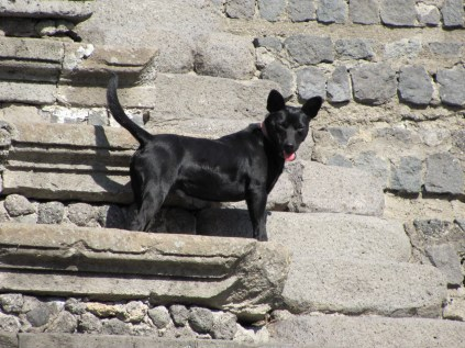 One of the Pompeii dogs