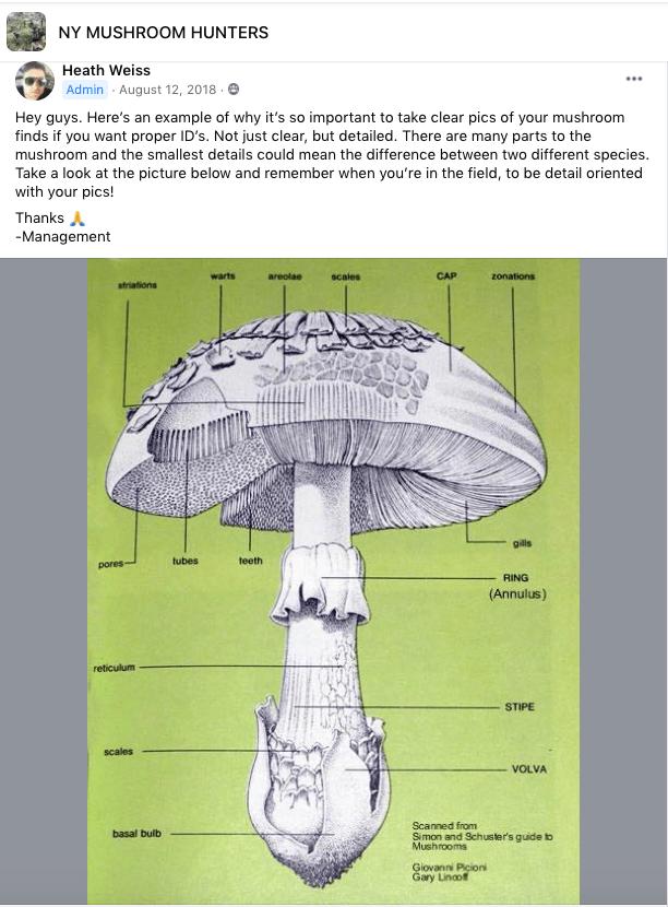 mushrooms-mirror-past-professions