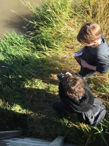 Examining the ecosystem.