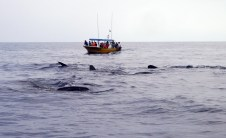 Did I mention the whale sharks are as big as a bus?