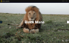 Screenshot dal microsito del National Geographic, The Serengeti Lion.