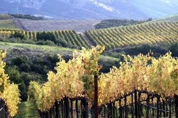 The famed Stagecoach Vineyards out of Napa Valley