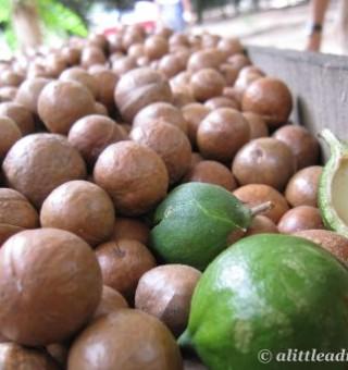valhalla macadamia nuts antigua