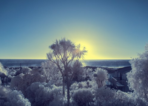 Cabbage tree at sunrise