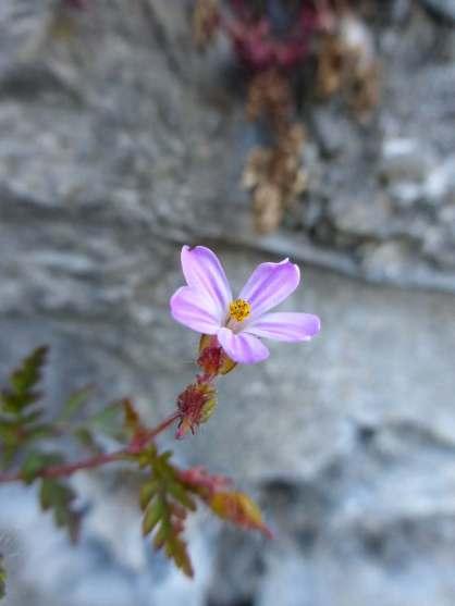 Flower growin out of roadside wall