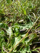 These little frogs were only about 1 centimetre long.