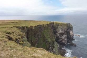 11 Sea cliff with nesting birds