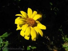 10 Garden flower