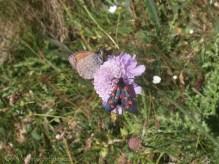 2 Butterfly and Burnett