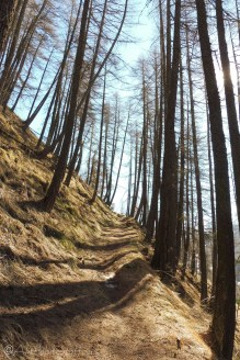 2 Path through the trees