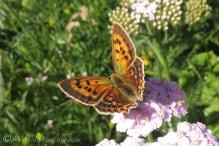 30 Unidentified, but beautiful, butterfly