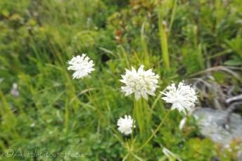 9 Unidentified white flower
