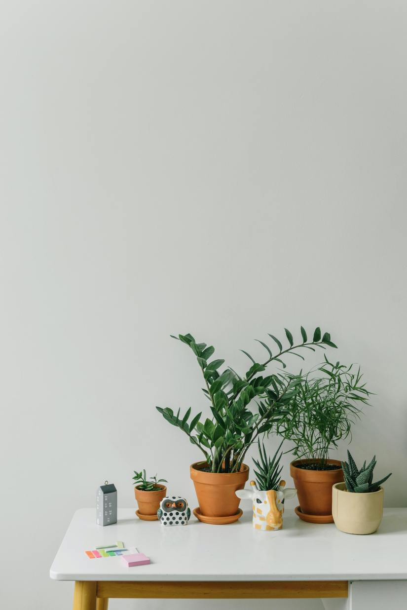 Green Potted Plants on White Table