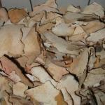 Polyporus (Fu Ling) (mushroom)