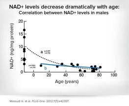 NAD+ levels decrease
