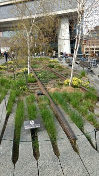 City meets nature on the High Line