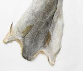 Perigo de extinção do Bacalhau
