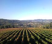 Vinhos Verdes na Suíça