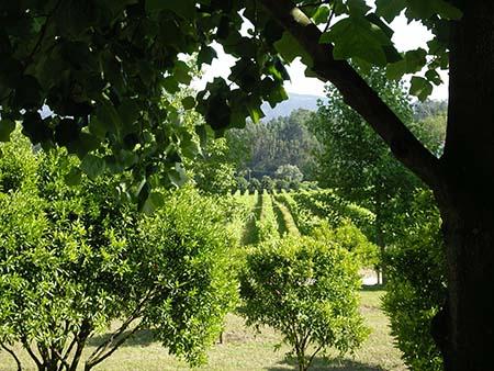 vinho verde vinha 450