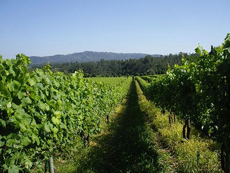 Região vinhos verdes 450