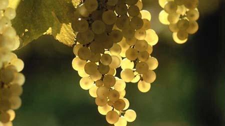 Vinho Verde 450