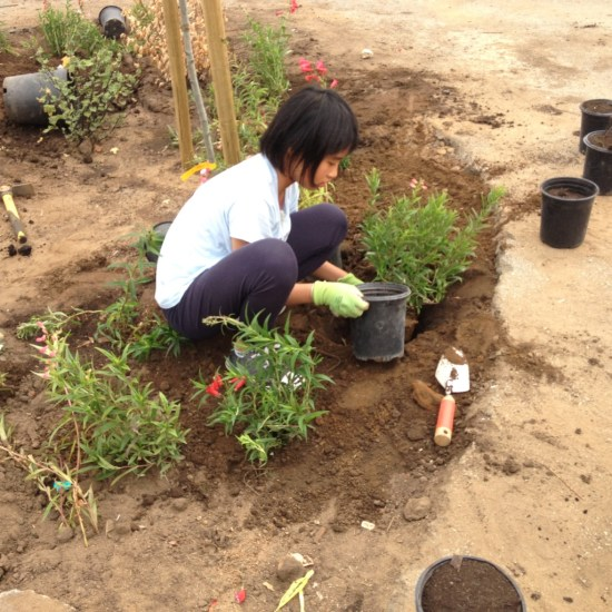 Young hands planting California native trees and understory plants at the Rear Yard of James Denman Middle School.