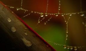 Heavy with rain