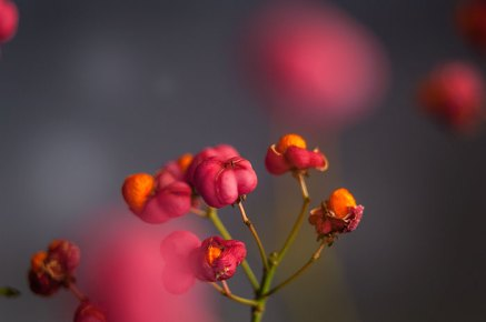 Pink and orange blossoms