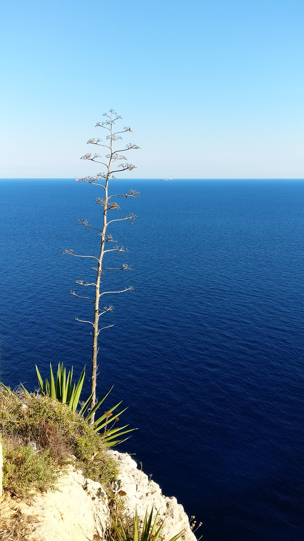 About Malta - The islands - agave trees at Blue Grotto Panorama