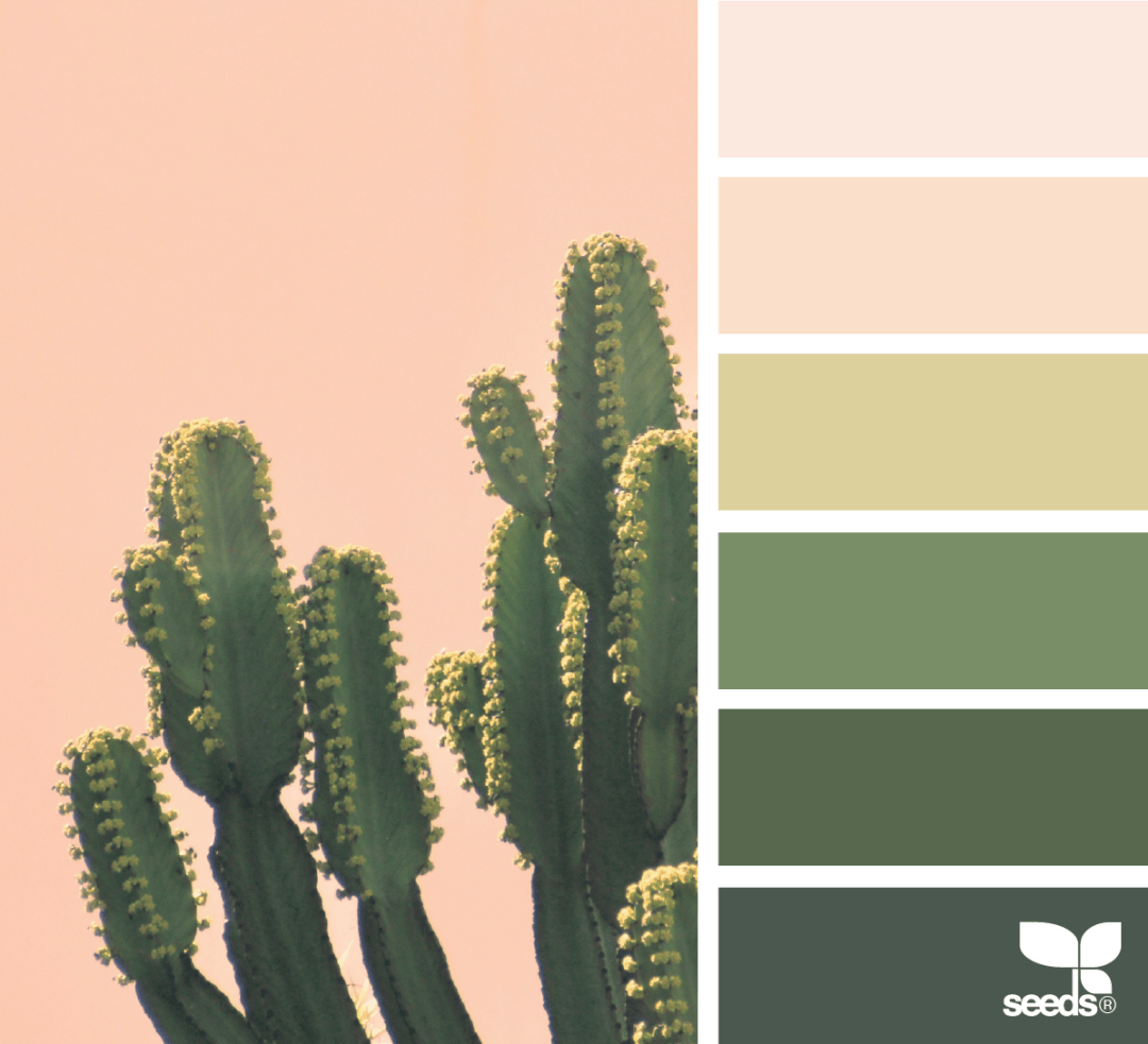Design seed - Cacti Color pink colour palette - Warm up your home with pink wall colour | Aliz's Wonderland